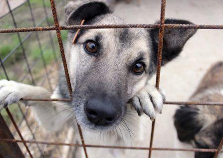 اعتراض فروشگاه های حیوانات خانگی (پت شاپ) به مقررات شهر مونترال