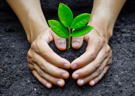 اگر به موقع بیدار شوید محیط زیست را نجات می دهید!؟