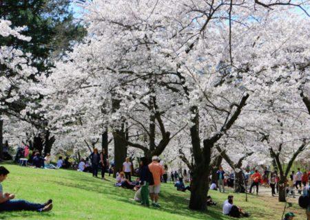 بهار مهمان جنوب انتاریو خواهد بود