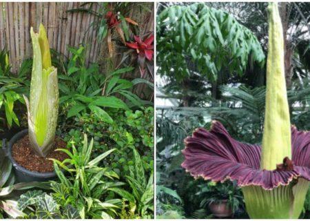 «گل جسد» در «باغوحش تورنتو»