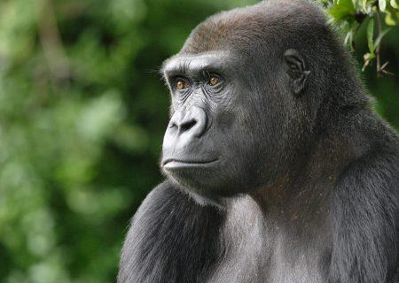 کدام حیوانات در خطر ابتلا به ویروس کرونا هستند؟