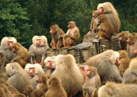 رعايت فاصله اجتماعی در ميان حيوانات