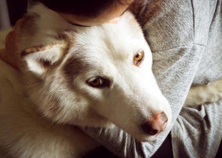 سگ، قدیمیترین دوست انسان