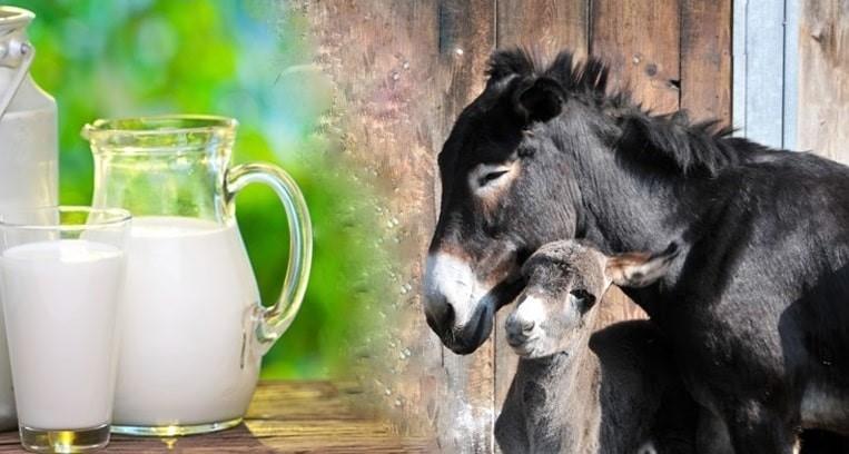 کرونا به بازار شیر الاغ رونق داد