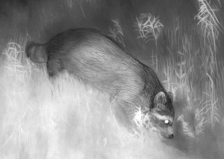 نمایشگاه نقاشی از حیوانات شبگرد در کانادا
