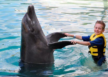 انسانها و دلفینها ویژگیهای شخصیتی مشابهی دارند