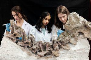 سه دانشجوی دانشگاه مادرید در حال ترمیم یک فسیل تیتانسور- برگزیدگان عکاسی علوم سال ۲۰۲۰