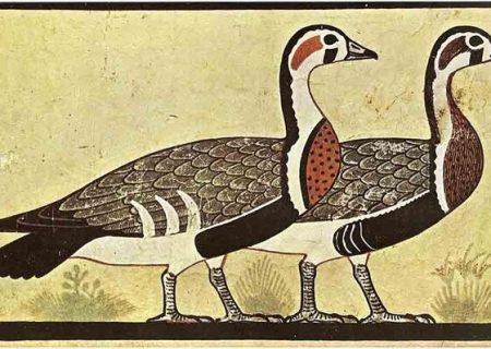 کشف گونه ناشناخته غاز در نقاشیهای مصر باستان