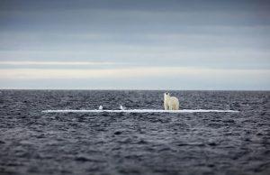 یک خرس قطبی روی تکه یخی سرگردان