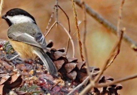 زوج تورنتویی آشیانهساز پرندگان