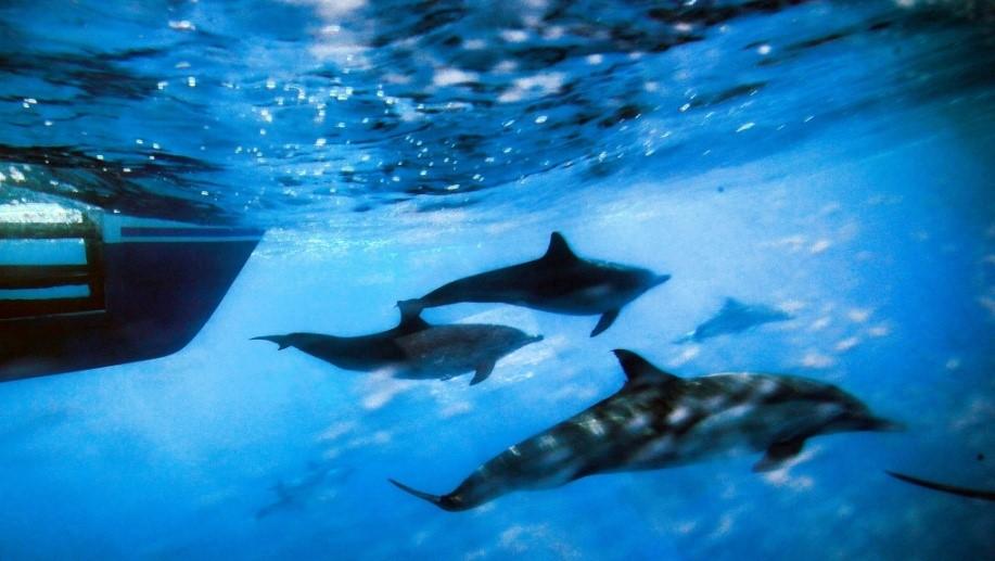 اقیانوسها به نفس نفس افتادهاند