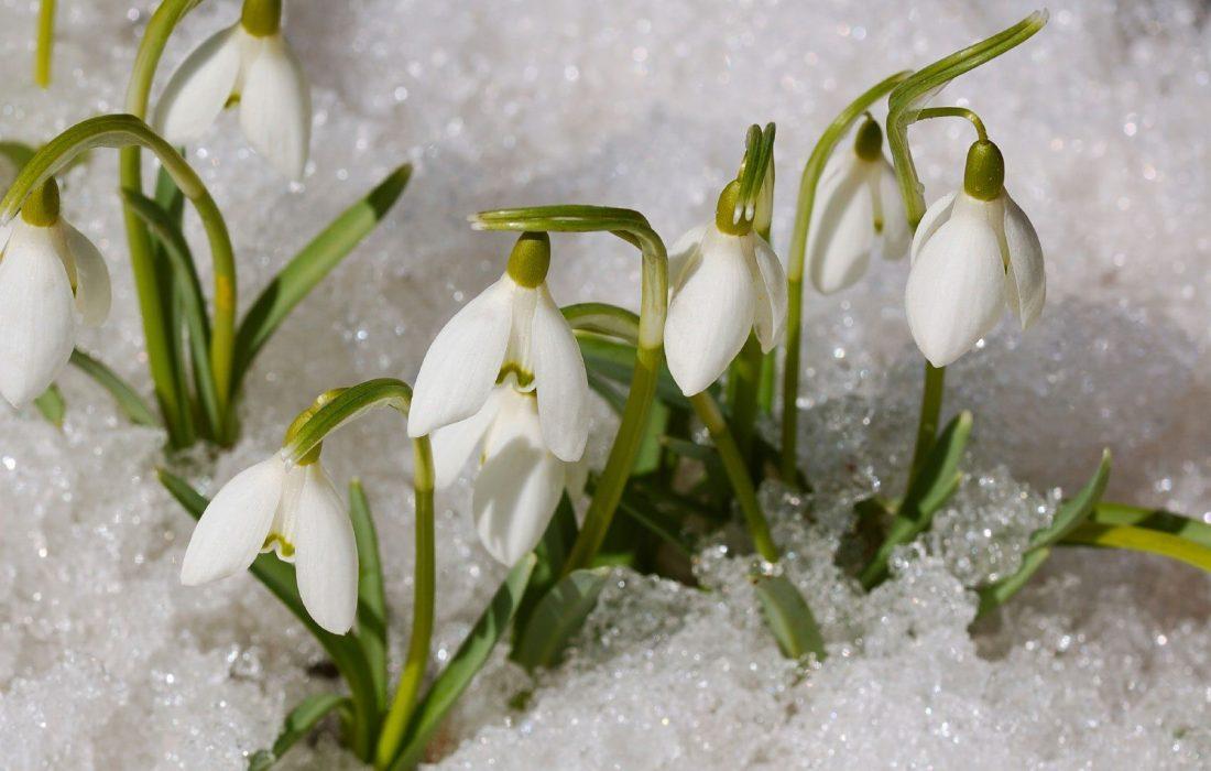 برف بهاری در انتاریو!