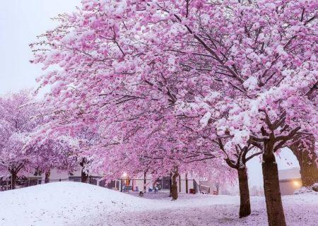برف بهاری در تورنتو و مونترال
