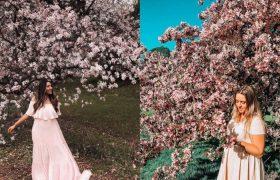 دنیای جادویی شکوفههای صورتی