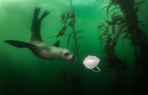 رالف پیس-بازی شیر دریایی با ماسک