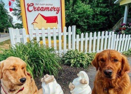 سگتان را به یک بستنی مهمان کنید