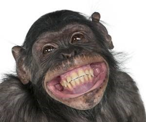 خنده میمون