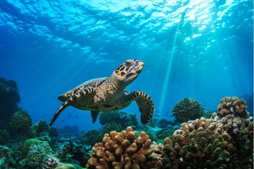 ۲۳ مه روز جهانی لاکپشت