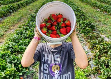 تابستانی با طعم توتفرنگی