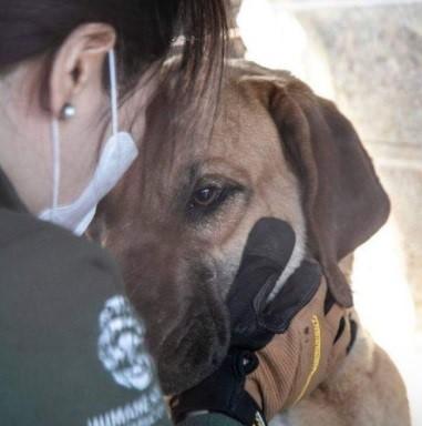 نجات ۱۷۱ سگ از مزرعهای در کرهجنوبی
