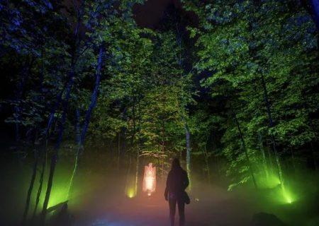 پیادهروی شبانه در دل جنگلی اسرارآمیز