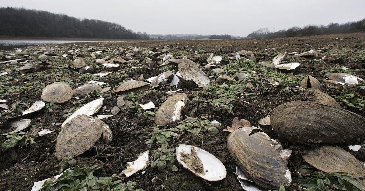 مرگ ۱ میلیارد جانور دریایی کانادا بر اثر گرما