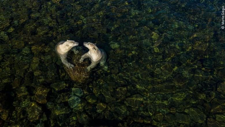 درخشش عکاسان کانادایی در مسابقه عکس حیات وحش ۲۰۲۱
